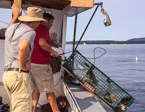 Hauling lobster traps on boat